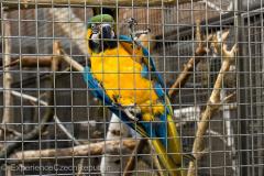 201405_Bonaparte_Parrot_zoo_Bosovice_00014
