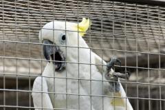 201405_Bonaparte_Parrot_zoo_Bosovice_00015