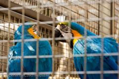 201405_Bonaparte_Parrot_zoo_Bosovice_00019