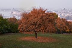 202003_Budapest_0005