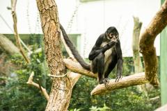 Zoo Zlin