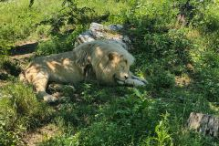 Hodonin_Zoo_08