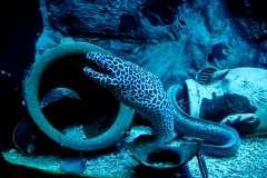 SeaWorld Prague